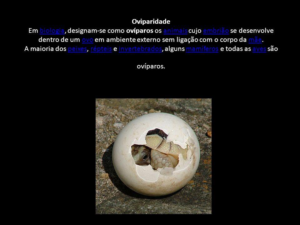 Oviparidade Em biologia, designam-se como ovíparos os animais cujo embrião se desenvolve dentro de um ovo em ambiente externo sem ligação com o corpo da mãe.