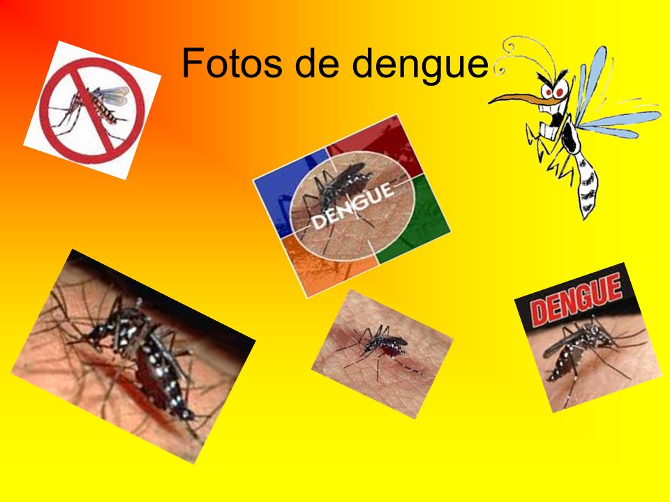 Fotos de dengue