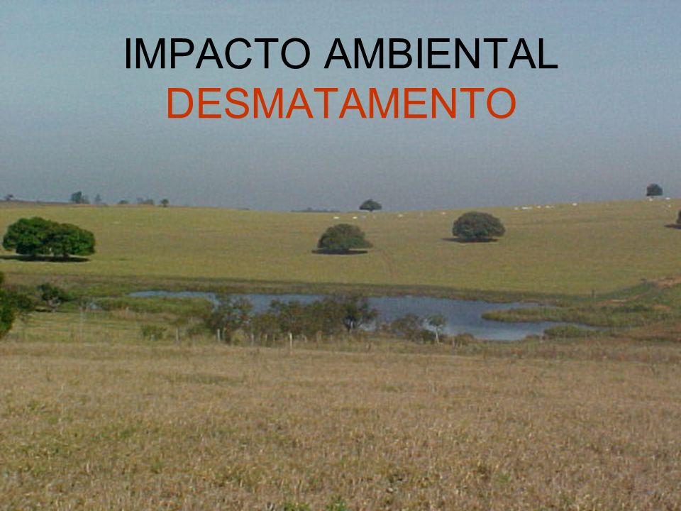 IMPACTO AMBIENTAL DESMATAMENTO