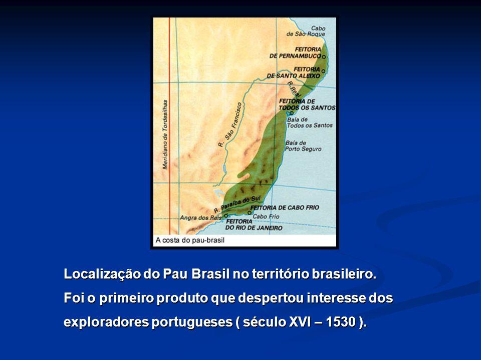 Localização do Pau Brasil no território brasileiro. Foi o primeiro produto que despertou interesse dos exploradores portugueses ( século XVI – 1530 ).