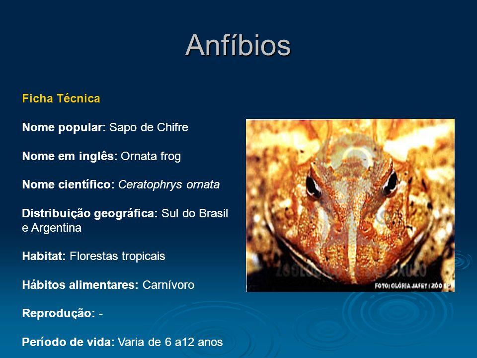 Anfíbios Ficha Técnica Nome popular: Sapo de Chifre Nome em inglês: Ornata frog Nome científico: Ceratophrys ornata Distribuição geográfica: Sul do Br