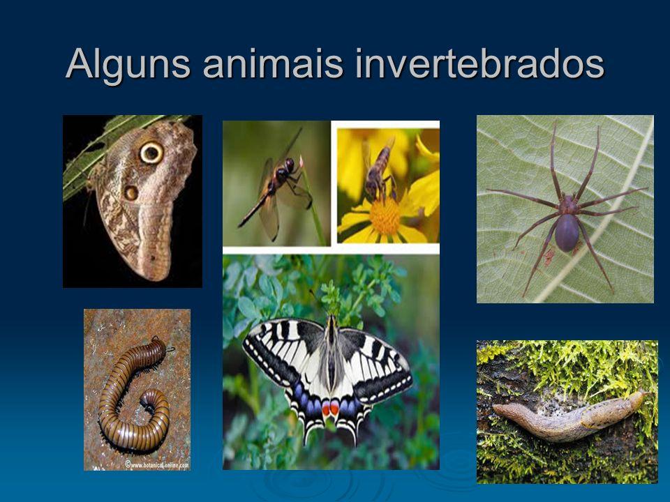 Alguns animais invertebrados