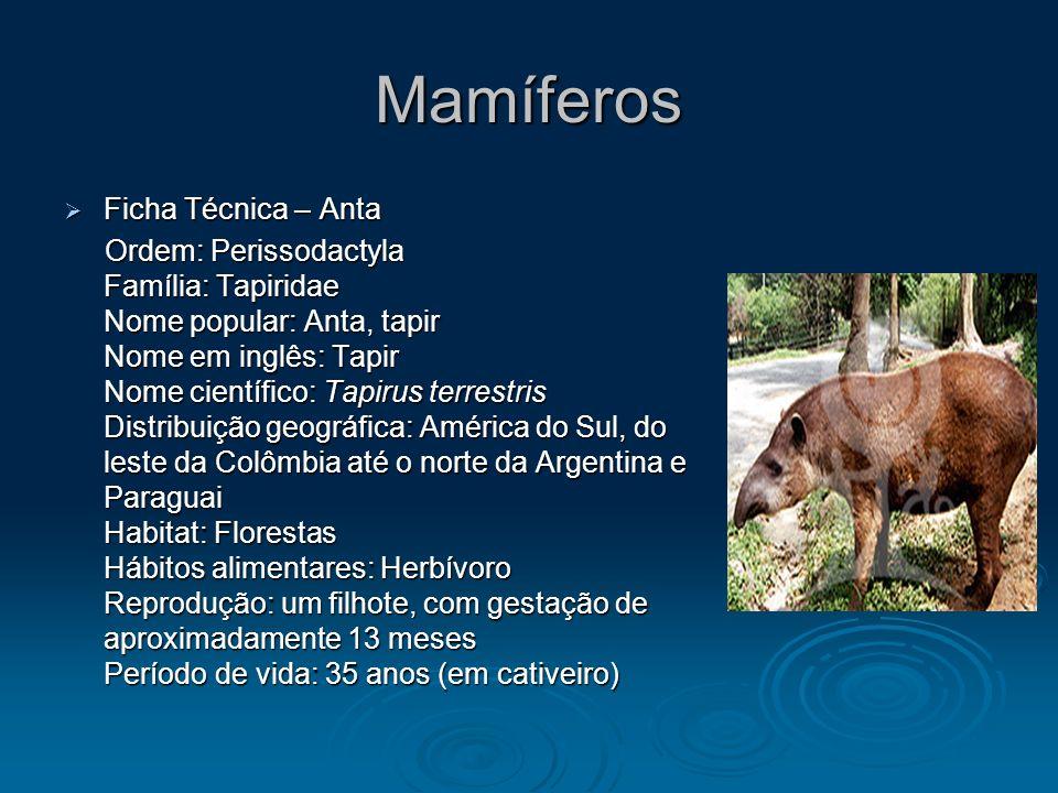 Mamíferos Ficha Técnica – Anta Ficha Técnica – Anta Ordem: Perissodactyla Família: Tapiridae Nome popular: Anta, tapir Nome em inglês: Tapir Nome cien