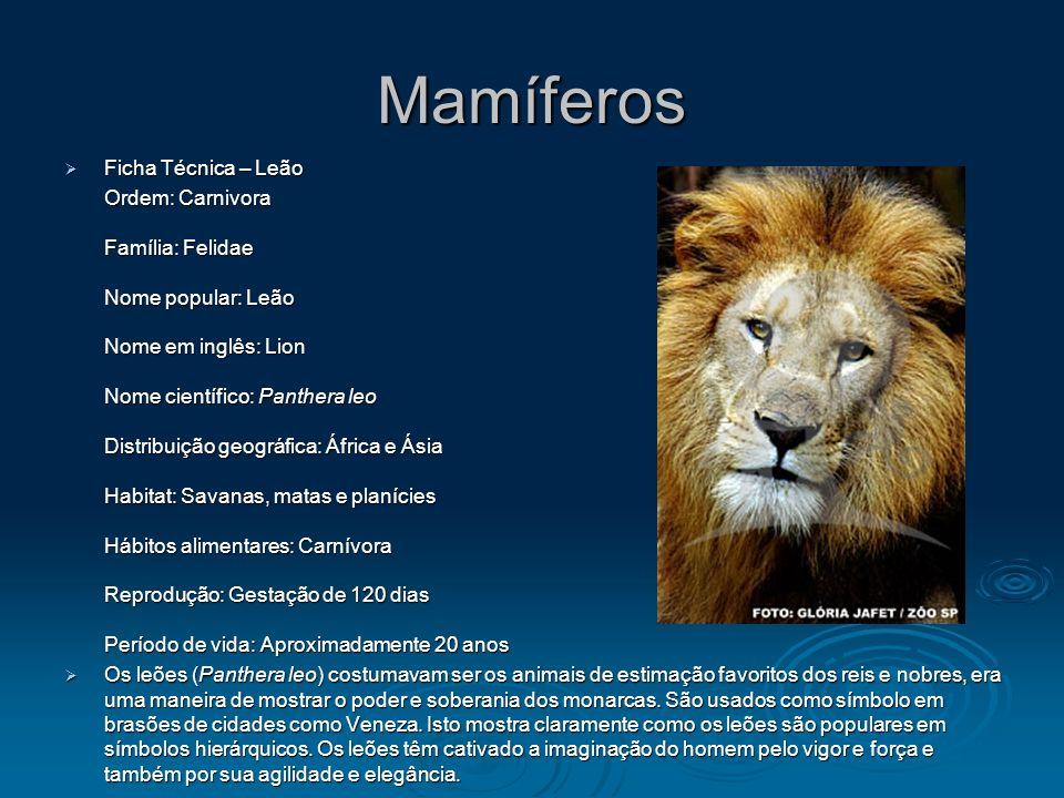 Mamíferos Ficha Técnica – Leão Ficha Técnica – Leão Ordem: Carnivora Família: Felidae Nome popular: Leão Nome em inglês: Lion Nome científico: Panther