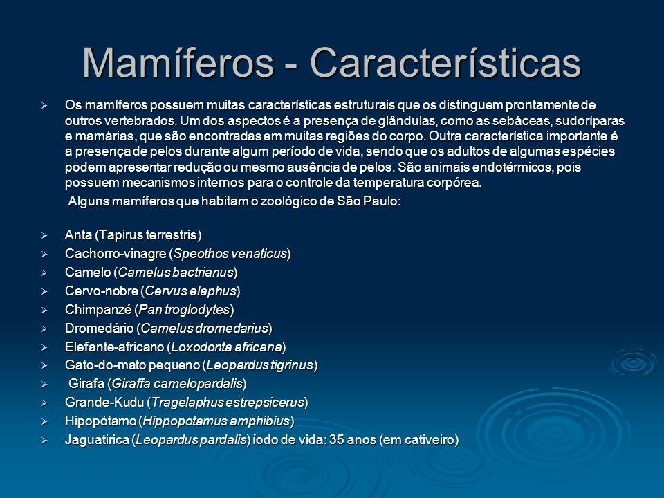 Mamíferos - Características Os mamíferos possuem muitas características estruturais que os distinguem prontamente de outros vertebrados. Um dos aspect