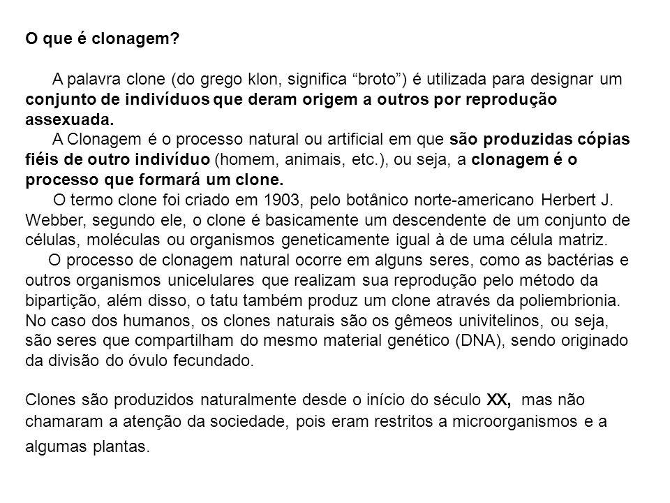 Argumentos a Favor do Cultivo - A produção dos alimentos transgênicos em larga escala beneficia o consumo humano, pois é menos onerosa e isso a tornaria acessível a toda a população.