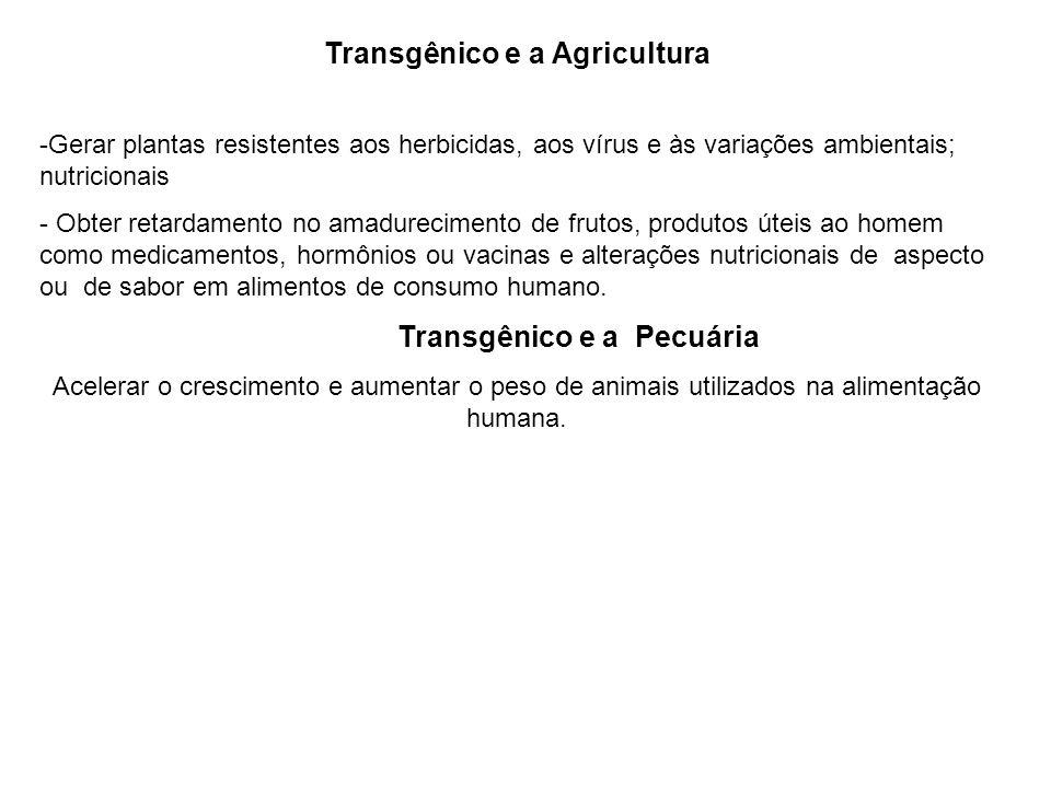 Transgênico e a Agricultura -Gerar plantas resistentes aos herbicidas, aos vírus e às variações ambientais; nutricionais - Obter retardamento no amadu