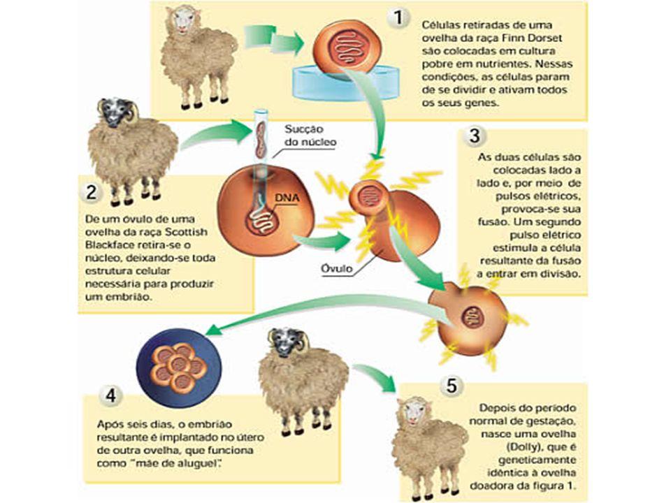 A maioria dos embriões clonados morre, apresenta malformações ou tem maior probabilidade de desenvolver problemas genéticos.