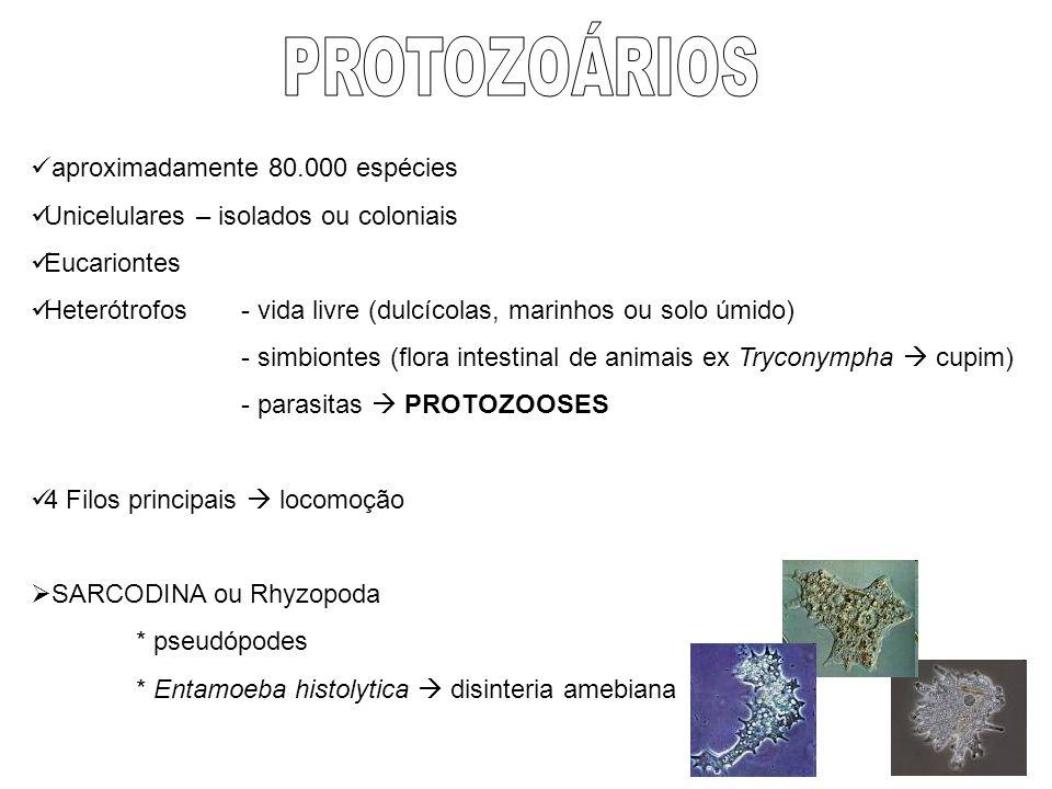 aproximadamente 80.000 espécies Unicelulares – isolados ou coloniais Eucariontes Heterótrofos - vida livre (dulcícolas, marinhos ou solo úmido) - simb