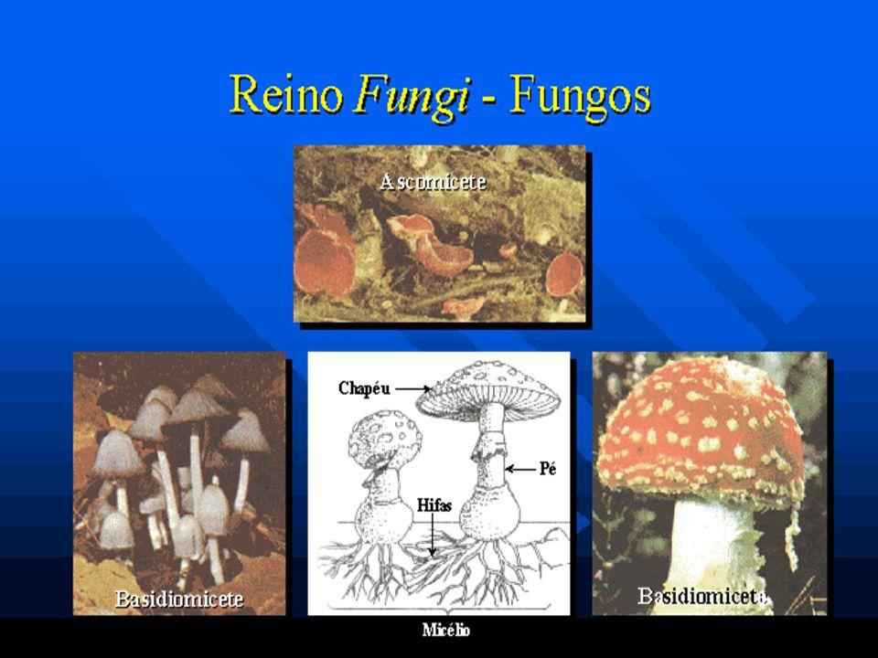 Os fungos, também conhecidos como bolores, são organismos : -eucariontes (com células nucleadas); - unicelulares e pluricelulares; - são aclorofilados e heterotróficos.