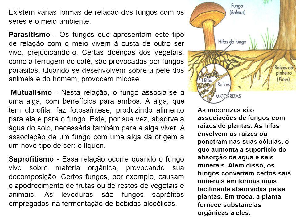 Existem várias formas de relação dos fungos com os seres e o meio ambiente. Parasitismo - Os fungos que apresentam este tipo de relação com o meio viv