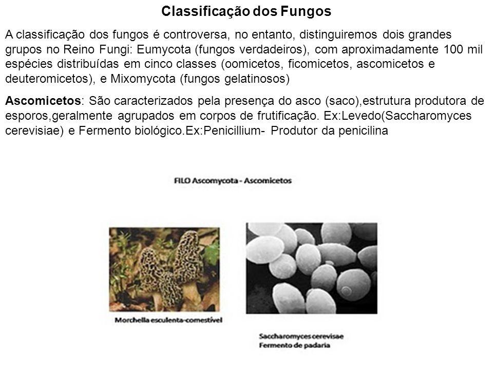 Classificação dos Fungos A classificação dos fungos é controversa, no entanto, distinguiremos dois grandes grupos no Reino Fungi: Eumycota (fungos ver