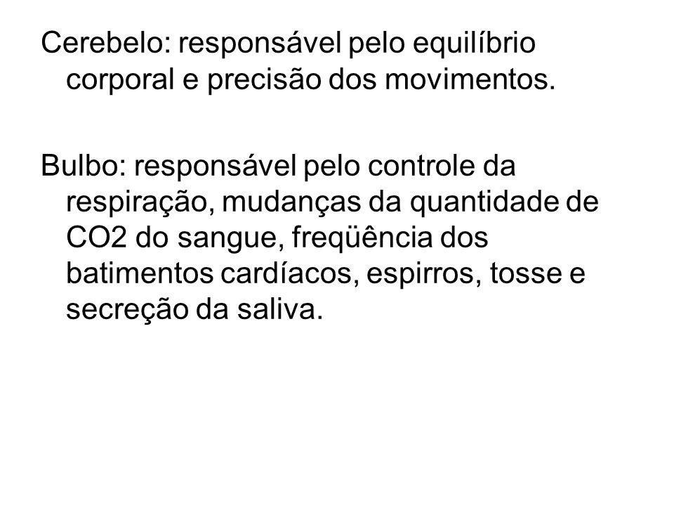 Cerebelo: responsável pelo equilíbrio corporal e precisão dos movimentos. Bulbo: responsável pelo controle da respiração, mudanças da quantidade de CO