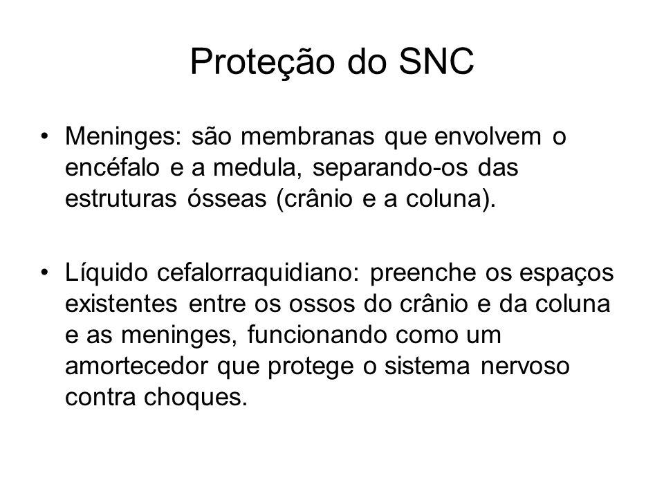 Proteção do SNC Meninges: são membranas que envolvem o encéfalo e a medula, separando-os das estruturas ósseas (crânio e a coluna). Líquido cefalorraq