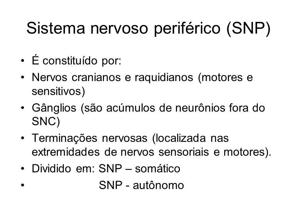 Sistema nervoso periférico (SNP) É constituído por: Nervos cranianos e raquidianos (motores e sensitivos) Gânglios (são acúmulos de neurônios fora do