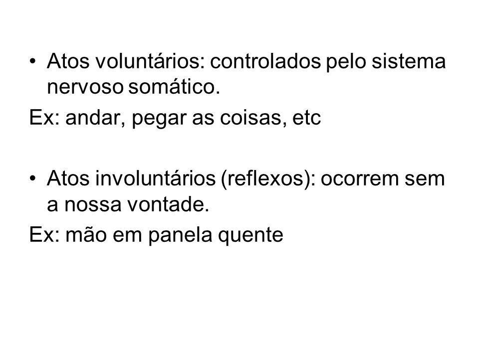 Atos voluntários: controlados pelo sistema nervoso somático. Ex: andar, pegar as coisas, etc Atos involuntários (reflexos): ocorrem sem a nossa vontad