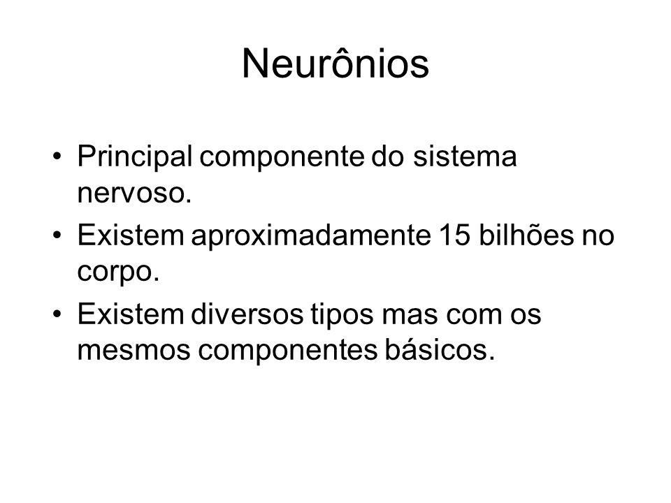 Neurônios Principal componente do sistema nervoso. Existem aproximadamente 15 bilhões no corpo. Existem diversos tipos mas com os mesmos componentes b