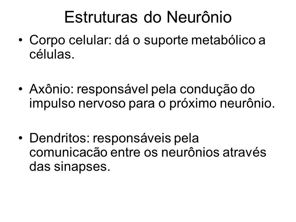 Estruturas do Neurônio Corpo celular: dá o suporte metabólico a células. Axônio: responsável pela condução do impulso nervoso para o próximo neurônio.