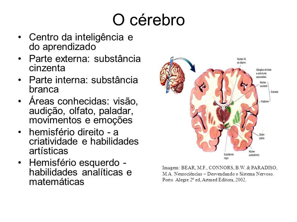 O cérebro Centro da inteligência e do aprendizado Parte externa: substância cinzenta Parte interna: substância branca Áreas conhecidas: visão, audição