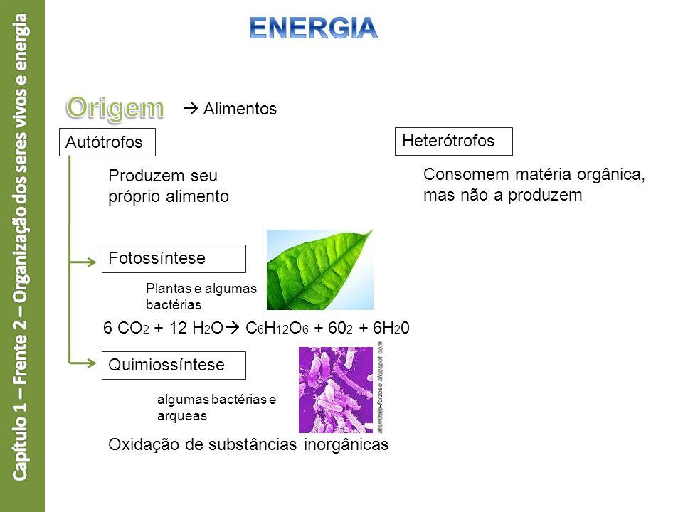 Alimentos Autótrofos Heterótrofos Fotossíntese Quimiossíntese Produzem seu próprio alimento Plantas e algumas bactérias 6 CO 2 + 12 H 2 O C 6 H 12 O 6
