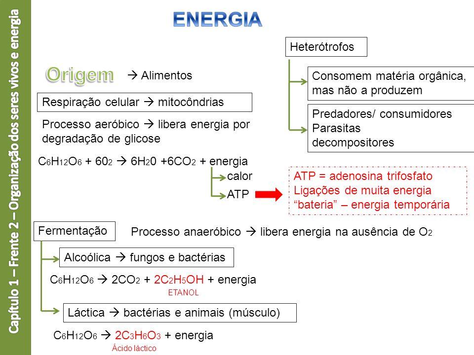 Heterótrofos Consomem matéria orgânica, mas não a produzem Fermentação Processo anaeróbico libera energia na ausência de O 2 Alcoólica fungos e bactér