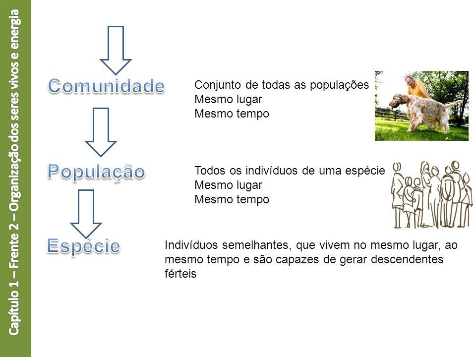 Nível molecular Nível de tecidos http://www.portalsaofrancisco.com.br/alfa/hist ologia-animal/histologia-animal-1.php Nível celular Estrutura e órgãos http://www.auladeanatomia.com/site/ Interação indivíduo(s) / ambiente http://pensareco.blogspot.com.br/2012/11/ a-ecologia-integral-segundo-leonardo.html Funcionamento do indivíduo
