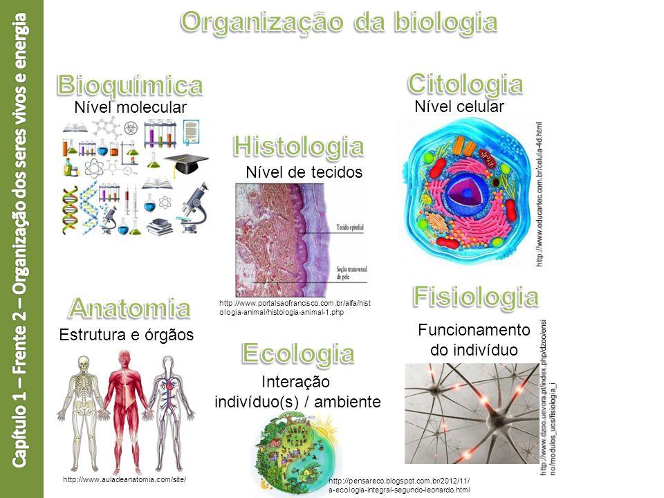 Nível molecular Nível de tecidos http://www.portalsaofrancisco.com.br/alfa/hist ologia-animal/histologia-animal-1.php Nível celular Estrutura e órgãos