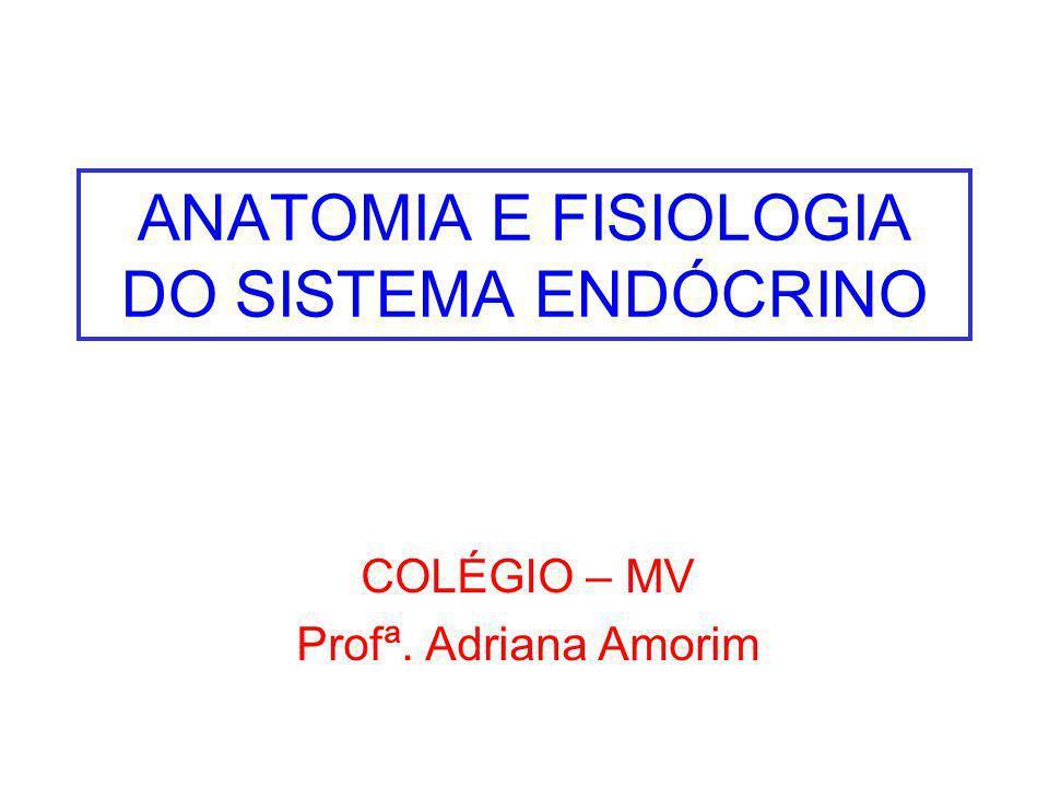 ANATOMIA E FISIOLOGIA DO SISTEMA ENDÓCRINO COLÉGIO – MV Profª. Adriana Amorim