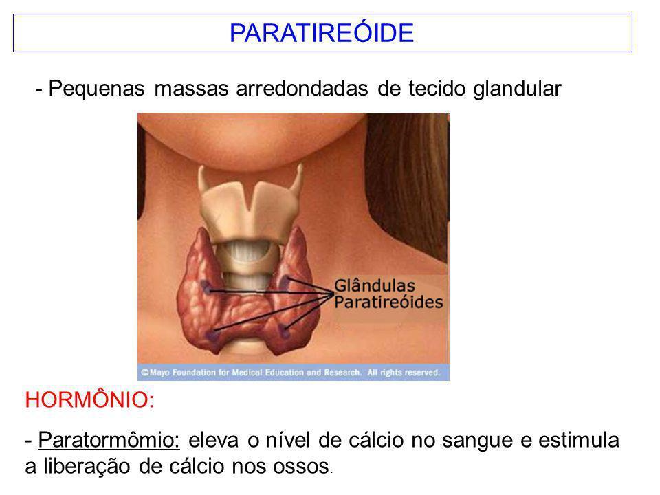 PARATIREÓIDE HORMÔNIO: - Paratormômio: eleva o nível de cálcio no sangue e estimula a liberação de cálcio nos ossos. - Pequenas massas arredondadas de