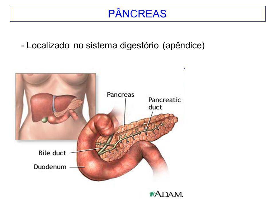 PÂNCREAS - Localizado no sistema digestório (apêndice)