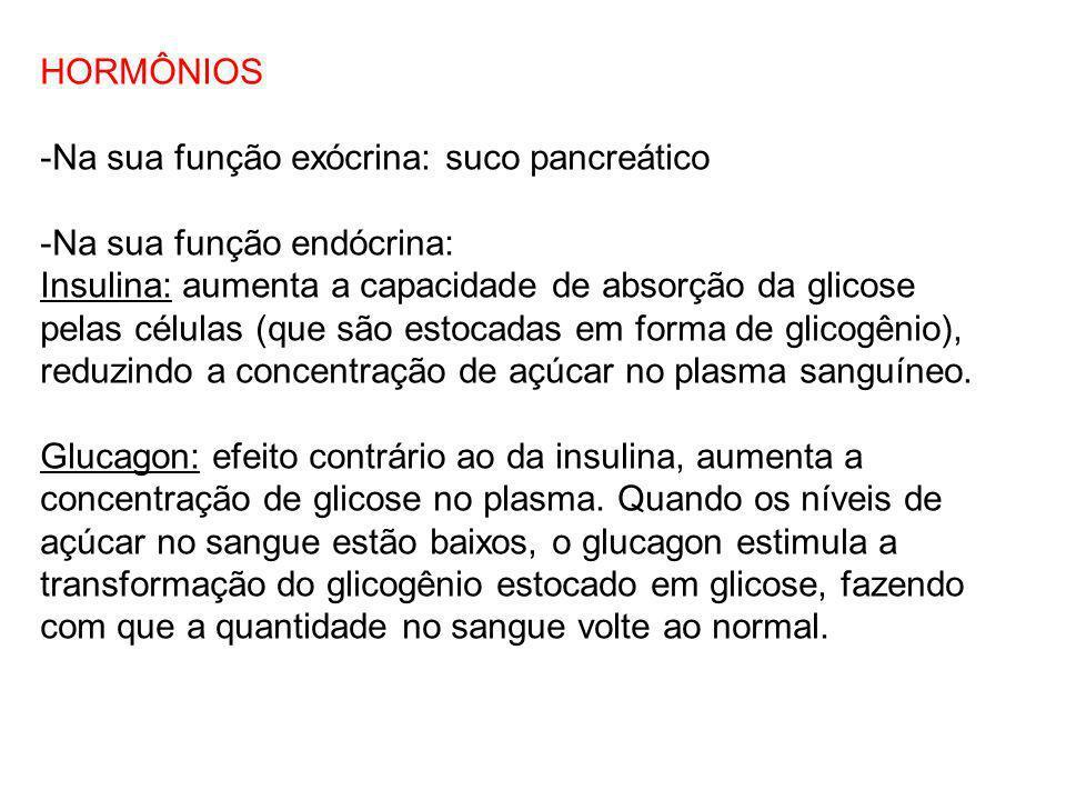 HORMÔNIOS -Na sua função exócrina: suco pancreático -Na sua função endócrina: Insulina: aumenta a capacidade de absorção da glicose pelas células (que