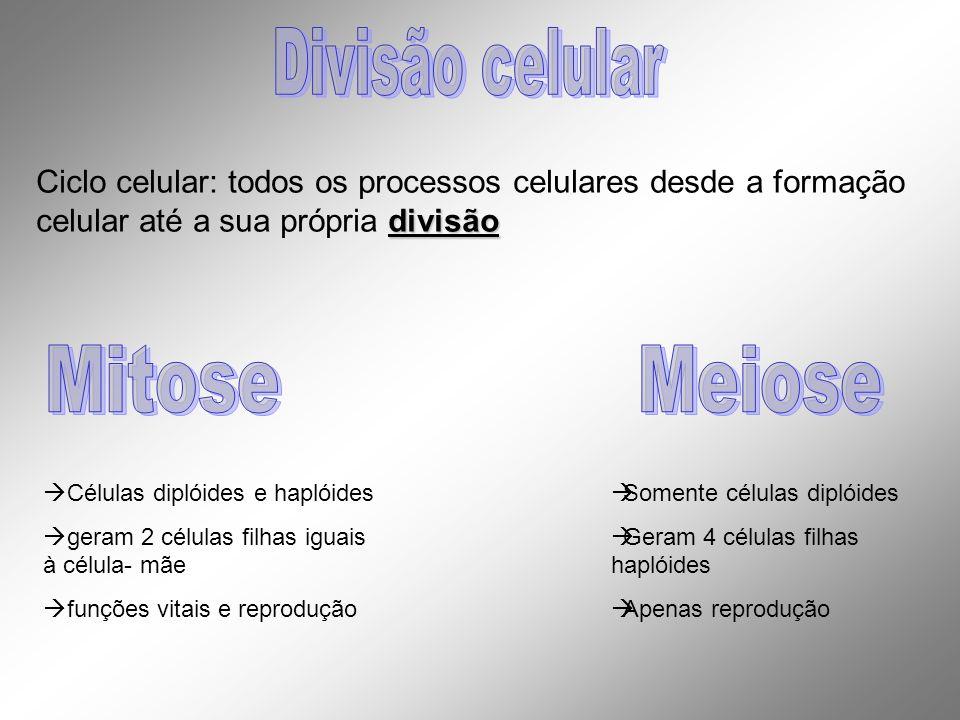 Células diplóides e haplóides geram 2 células filhas iguais à célula- mãe funções vitais e reprodução Somente células diplóides Geram 4 células filhas