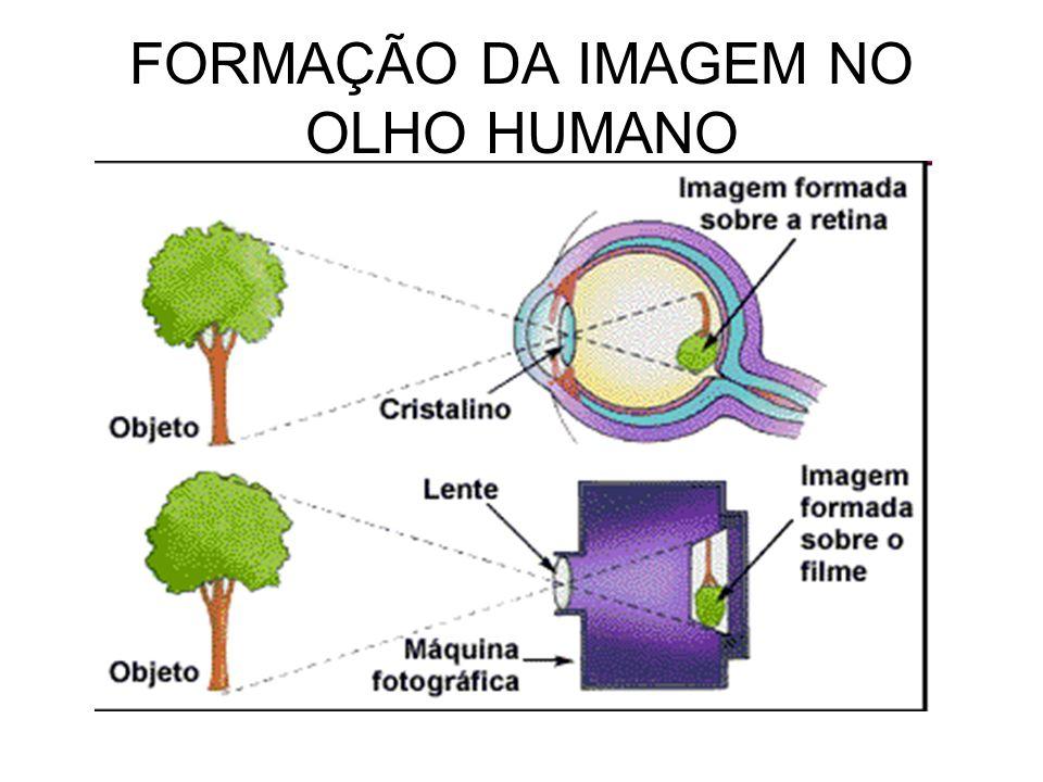 FORMAÇÃO DA IMAGEM NO OLHO HUMANO