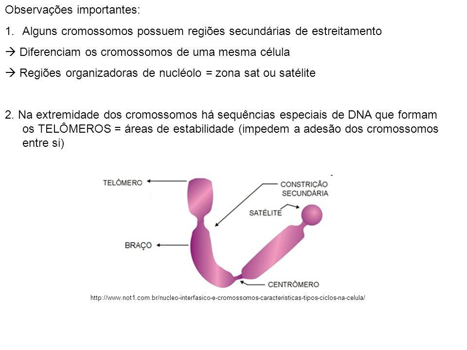 Observações importantes: 1.Alguns cromossomos possuem regiões secundárias de estreitamento Diferenciam os cromossomos de uma mesma célula Regiões orga