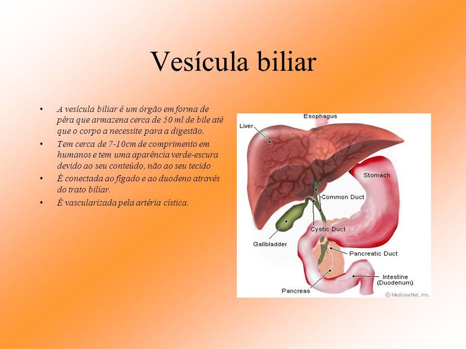 Vista por trás do fígado