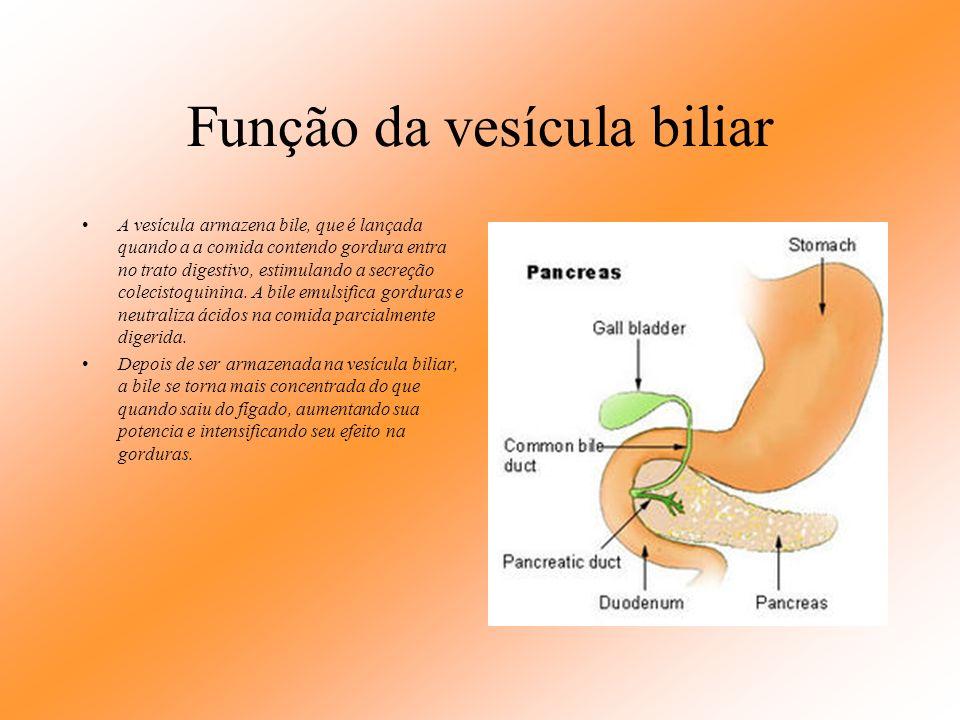 Vesícula biliar A vesícula biliar é um órgão em forma de pêra que armazena cerca de 50 ml de bile até que o corpo a necessite para a digestão. Tem cer