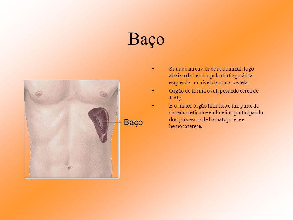 Artérias e veias do pâncreas O pâncreas é suprido arterialmente pelas artérias pancreaticoduodenais: a artéria mesentérica superior que origina as art