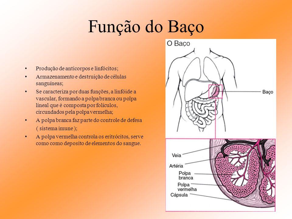 Baço Situado na cavidade abdominal, logo abaixo da hemicupula diafragmática esquerda, ao nível da nona costela. Órgão de forma oval, pesando cerca de