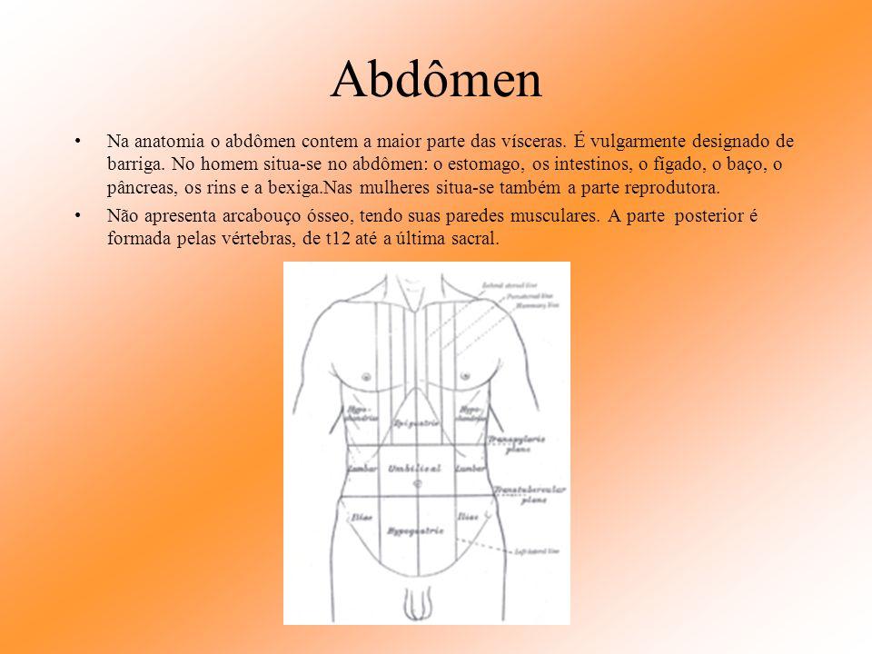 ABDÔMEN Conteúdo a ser apresentado Estômago; Intestinos: delgado e grosso; Cólons: transverso, ascendente, descendente, sigmóide, apêndice; Fígado; Ve