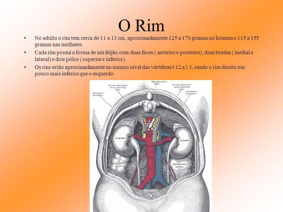 Baço O baço produz, armazena e destrói células sanguíneas. É o órgão mais freqüente injuriado do abdômen quando há pancadas.
