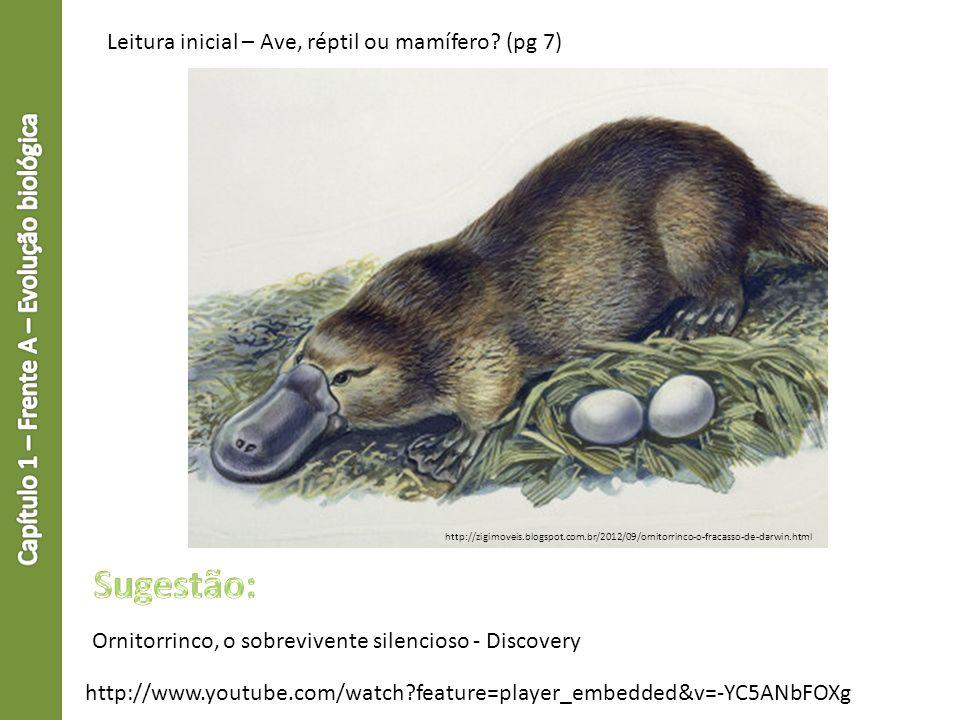 Leitura inicial – Ave, réptil ou mamífero? (pg 7) http://zigimoveis.blogspot.com.br/2012/09/ornitorrinco-o-fracasso-de-darwin.html http://www.youtube.