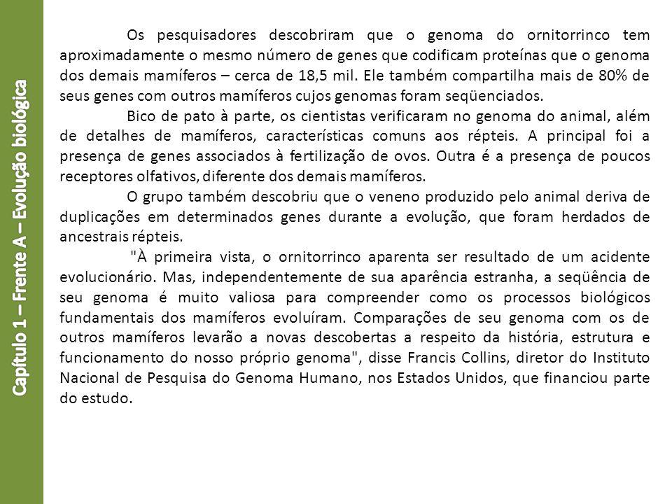Os pesquisadores descobriram que o genoma do ornitorrinco tem aproximadamente o mesmo número de genes que codificam proteínas que o genoma dos demais