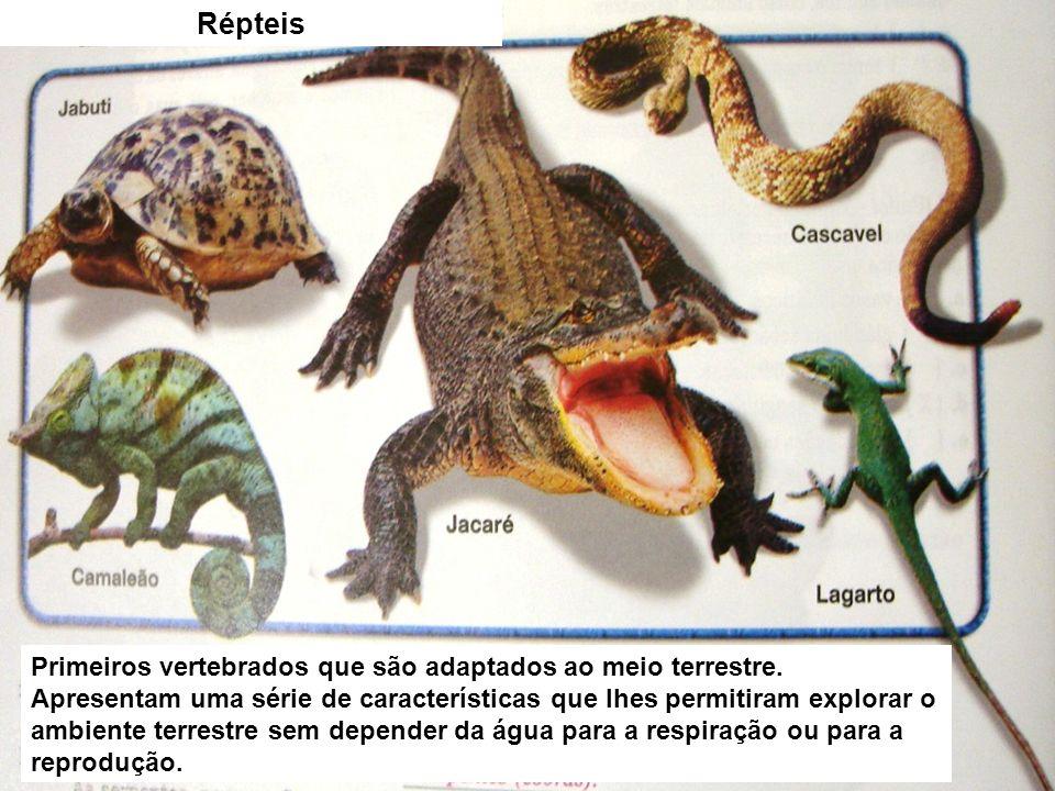 Adaptações para a vida na terra Pulmões mais eficientes, isto é, com maior número de alvéolos suficiente para as atividades respiratórias: Ovos com casca e com um equipamento que permite o desenvolvimento do embrião no seu interior; Pele seca, sem glândulas e mucosas, recobertas por escamas ( cobras e lagartos) ou placas córnea s (jacarés e crocodilos) ou ossos dérmicos (tartarugas).