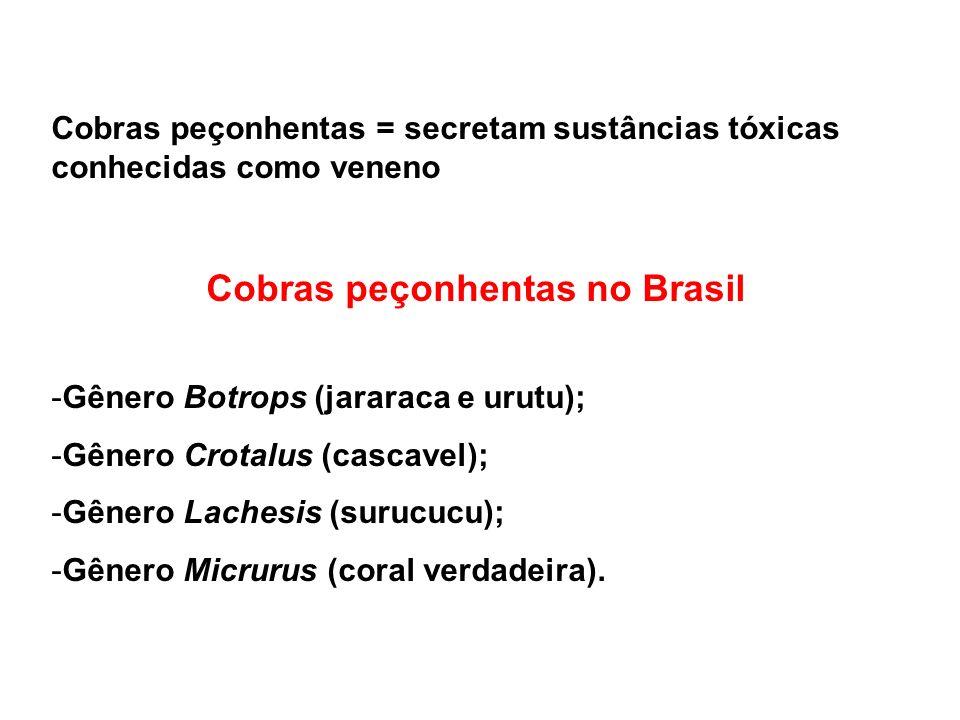 Cobras peçonhentas = secretam sustâncias tóxicas conhecidas como veneno Cobras peçonhentas no Brasil -Gênero Botrops (jararaca e urutu); -Gênero Crota