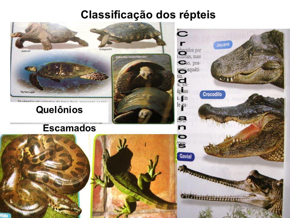 Reprodução Dos Repteis Classificação Dos Répteis