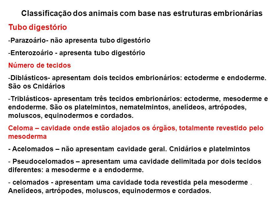 Classificação dos animais com base nas estruturas embrionárias Tubo digestório -Parazoário- não apresenta tubo digestório -Enterozoário - apresenta tu