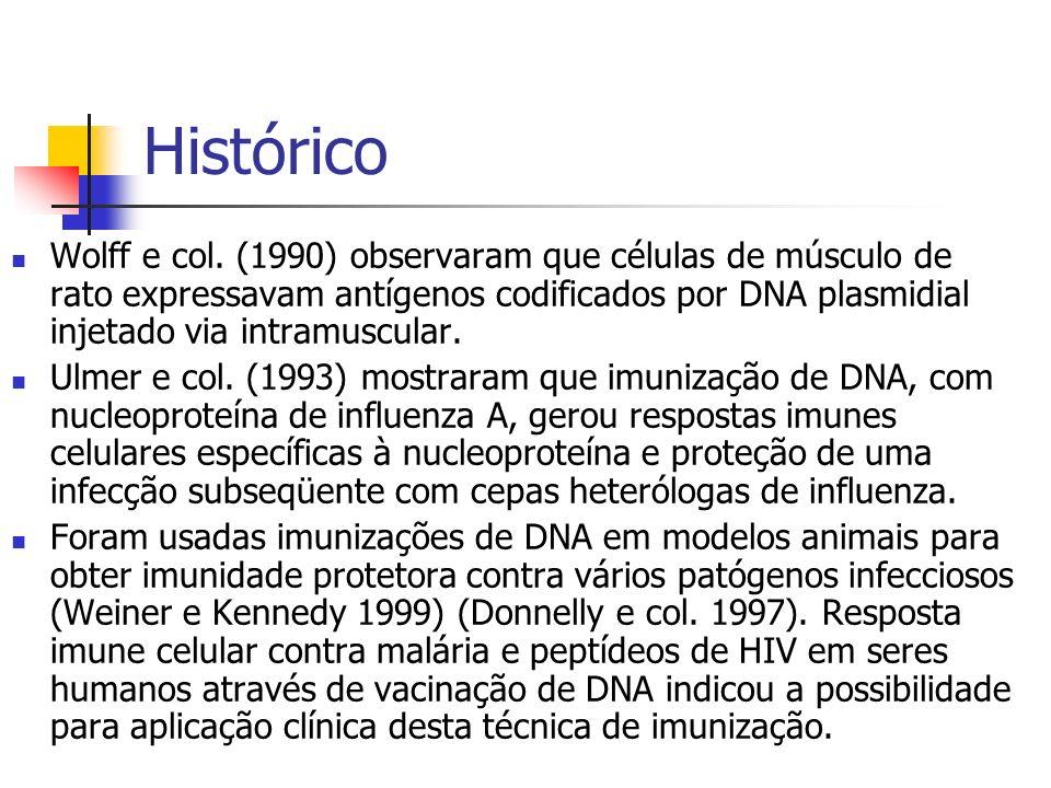 Histórico Wolff e col. (1990) observaram que células de músculo de rato expressavam antígenos codificados por DNA plasmidial injetado via intramuscula