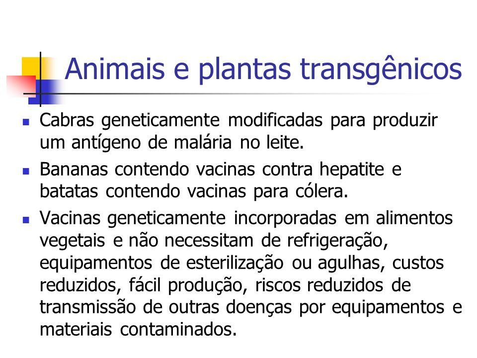 Animais e plantas transgênicos Cabras geneticamente modificadas para produzir um antígeno de malária no leite. Bananas contendo vacinas contra hepatit