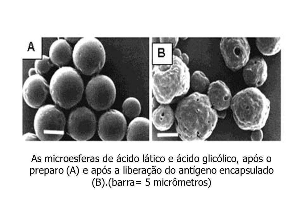As microesferas de ácido lático e ácido glicólico, após o preparo (A) e após a liberação do antígeno encapsulado (B).(barra= 5 micrômetros)