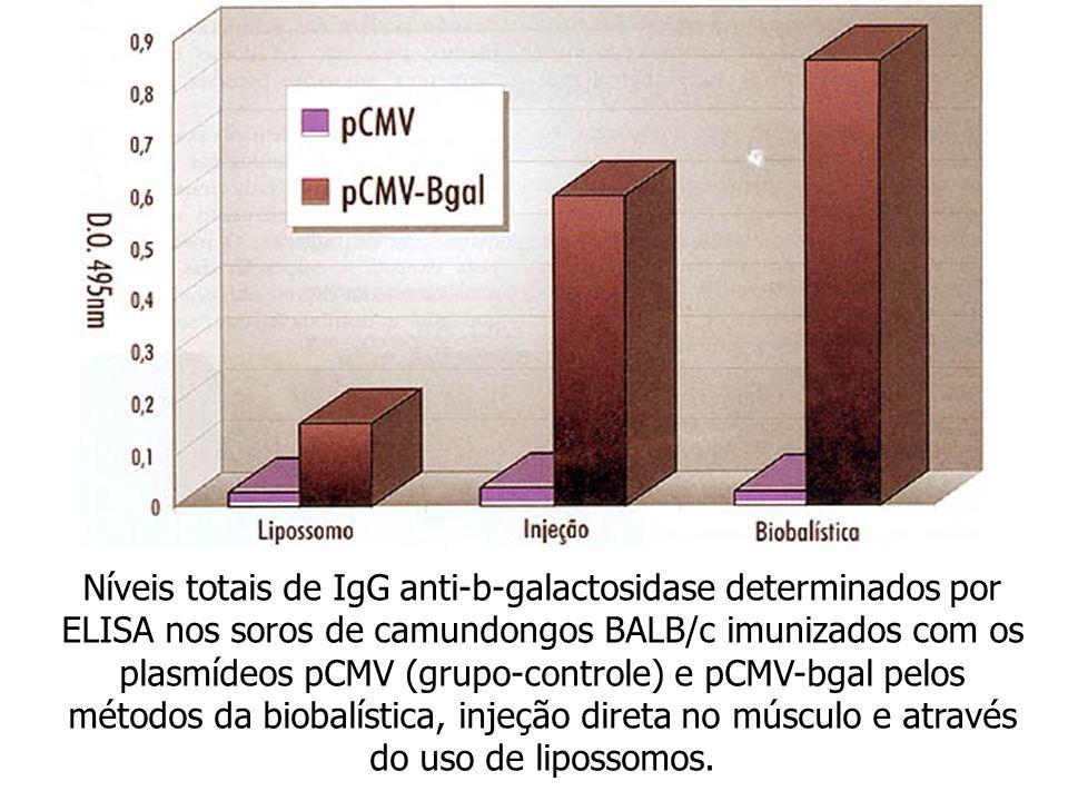 Níveis totais de IgG anti-b-galactosidase determinados por ELISA nos soros de camundongos BALB/c imunizados com os plasmídeos pCMV (grupo-controle) e
